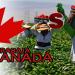 Imagen de personas que trabajan en Canadá